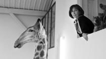 Sophie Calle, sans titre