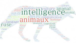 L'intelligence animale en question