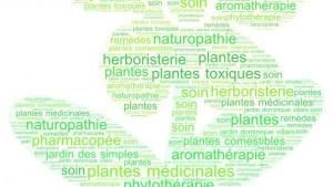 Découvrir les plantes médicinales et leurs usages