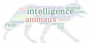 L'intelligence animale en question