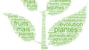 Comment l'homme a domestiqué les plantes ?