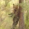 C'est pas Sorcier : Les ours
